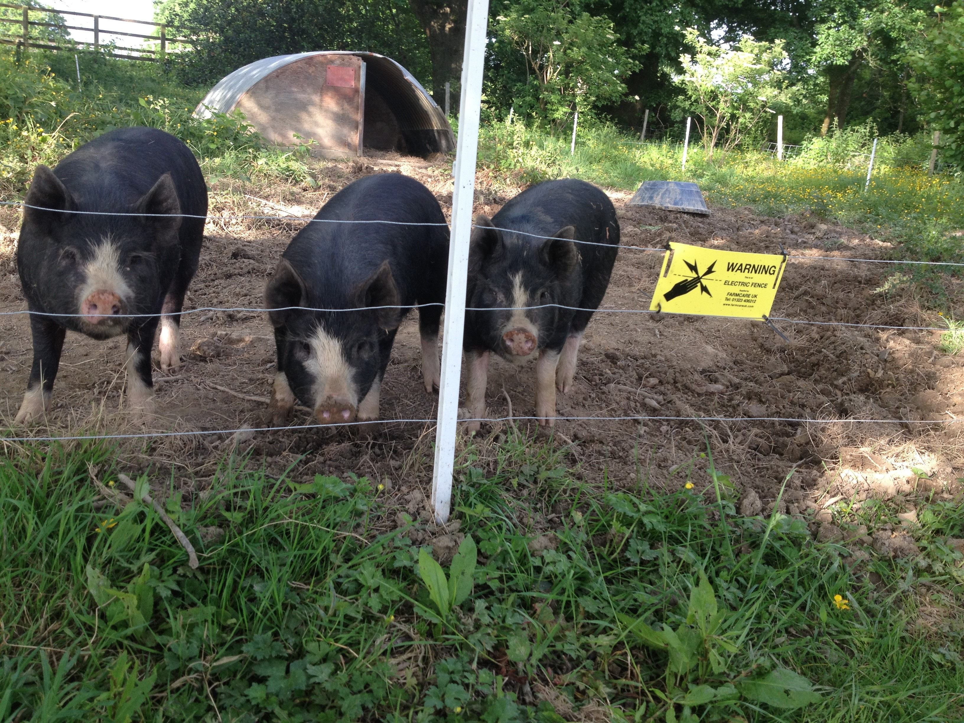 Lovely Pigs Electric Fence Wire Electrical System Block