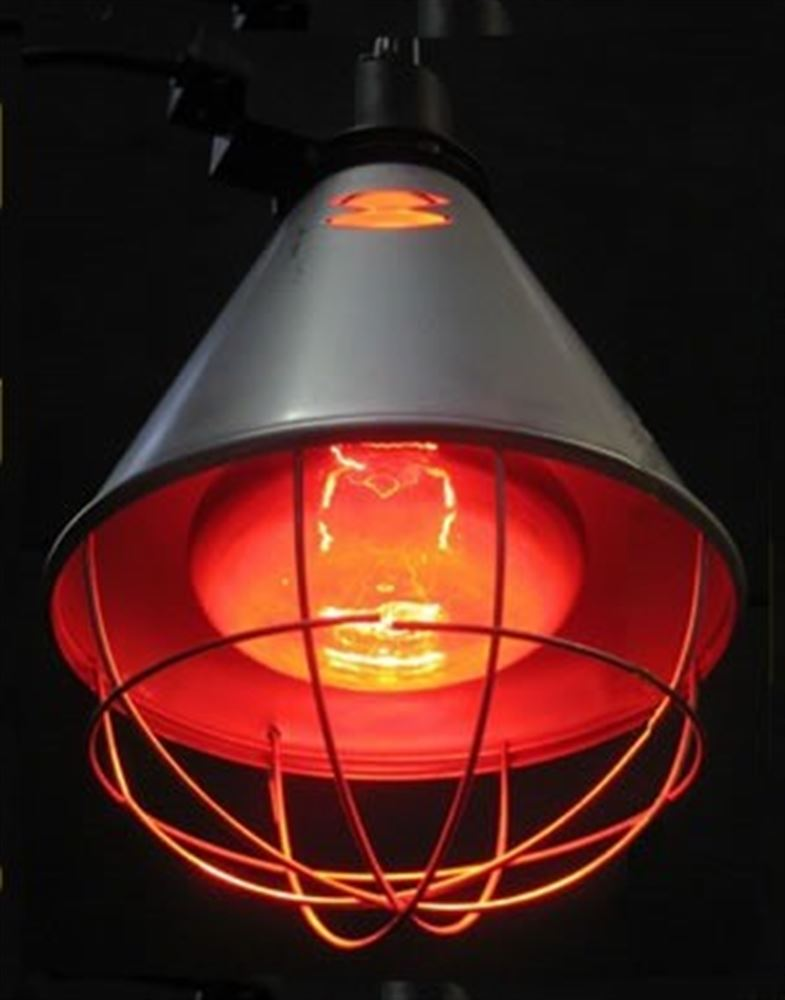 Heat Lamp Poultry Heat Lamps And Bulbs Livestock Heat Lamps And Bulbs Farmcare Uk Farmcareuk Com