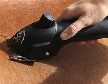 Buy Horse Clippers