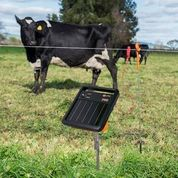 Electric Fencing for Cattle