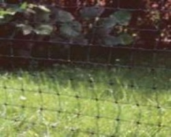Poultry Electric Net 25m in Green - keep your hens safe